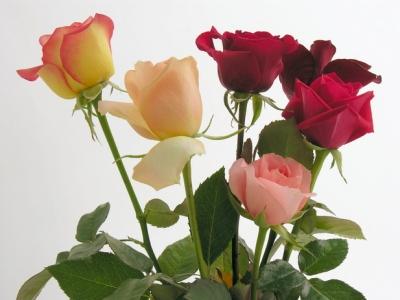 Цветы с доставкой - демонстрация любви и внимания