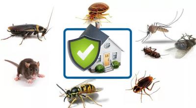 Как избавиться от насекомых и грызунов